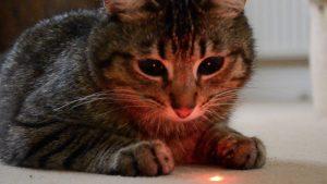 kot i laserowa kropka