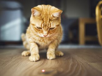 kot kontra czerowna kropka