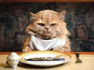 kot przy stole