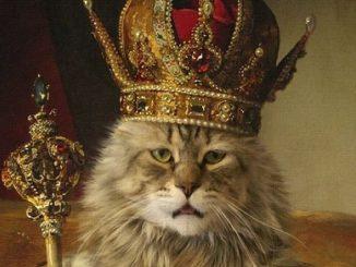 kot król
