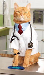 koci doktor